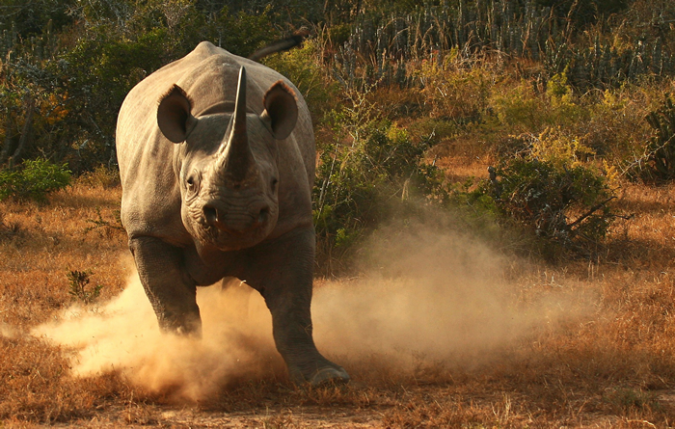 700 Charging Rhino.fw