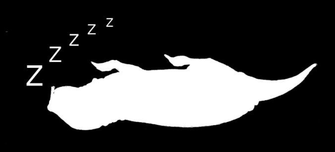 Sleeping.fw