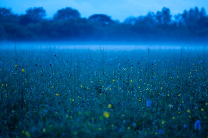 15_barney-wilczak-fine-art-prints-the-meadow-2.fw