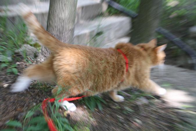 Cat darting.fw