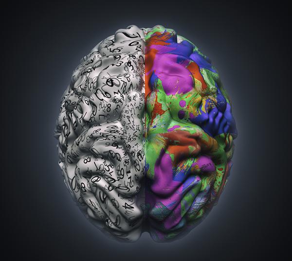 Human Brain.fw
