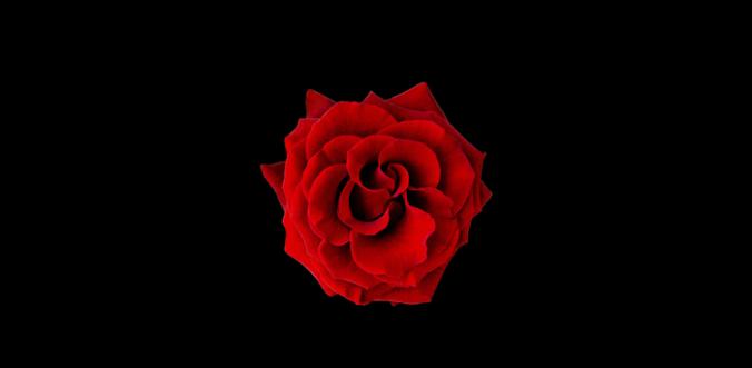 rose-alt-title-fw