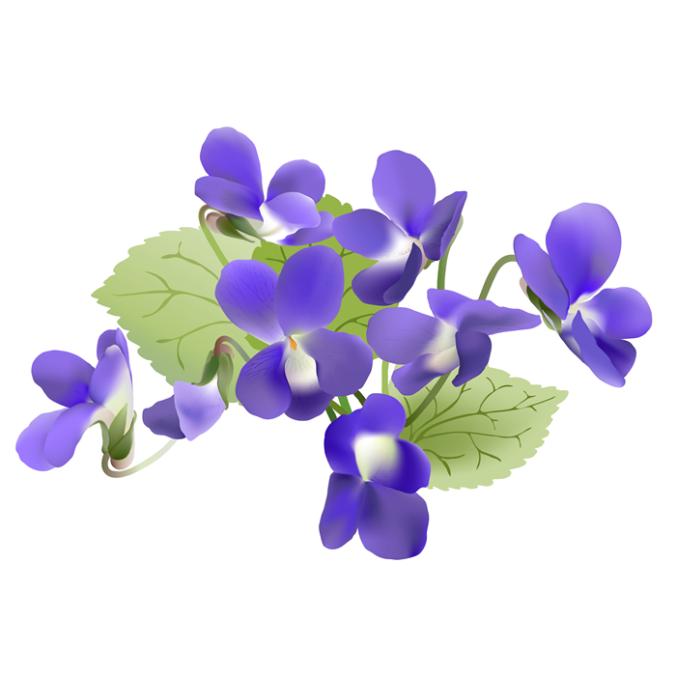 Violets.fw
